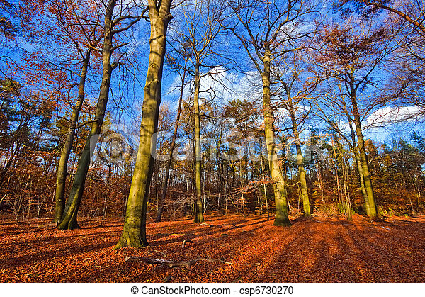 Vibrant image of autumn forest at sunset - csp6730270