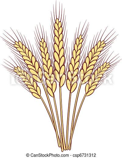 bunch of vector wheat ears - csp6731312