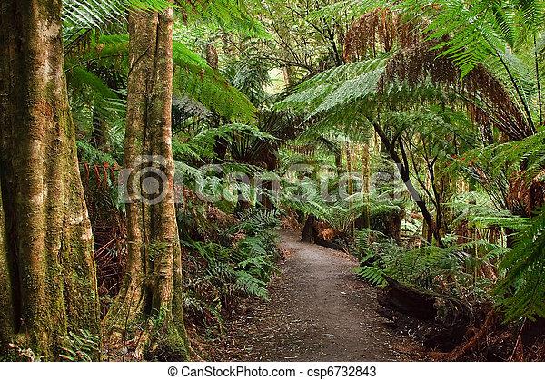 Rain forest, Australia - csp6732843