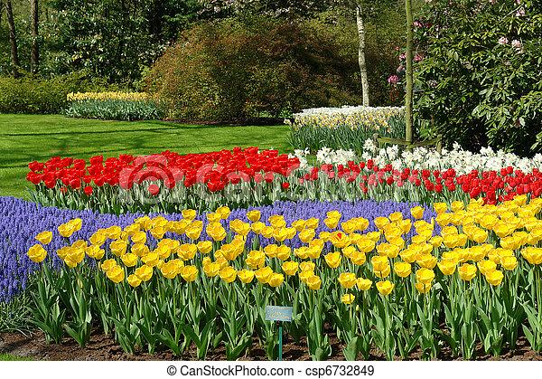 Flower bed in Keukenhof gardens - csp6732849