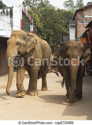 Elephants on the srtreet - csp6733489