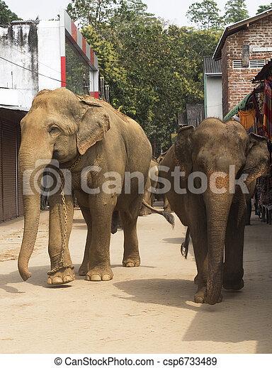 Elephants on the srtreet - csp6733489