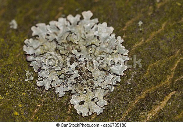 Close up of lichen on wood surface - csp6735180