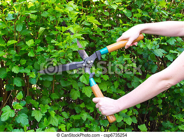 Hands are cut bush clippers - csp6735254