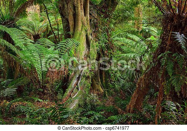 Rain forest, Australia - csp6741977