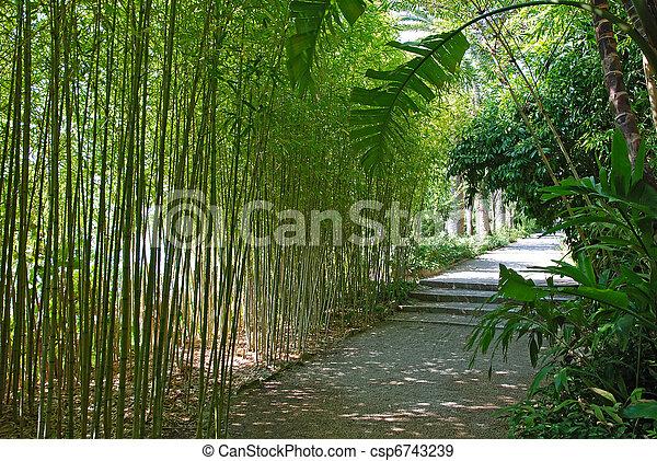 Banque de photographies de beau jardin bosquet par for Bambou dans le jardin