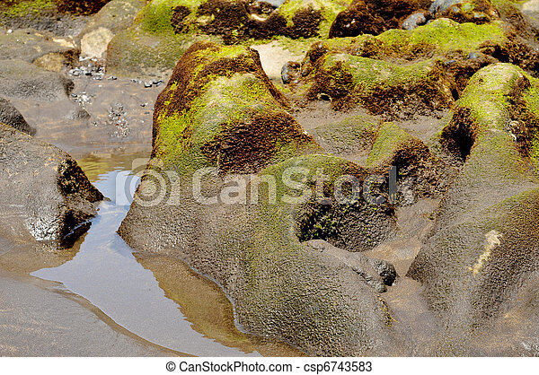 water on a moldy rock on a seashore - csp6743583