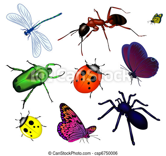 Set of various insects - csp6750006