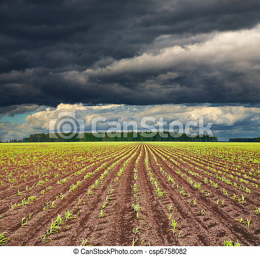 Field with sprouting crops - csp6758082