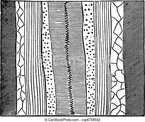 地質, 静脈, 型, 刻まれる, イラスト - csp6758542 地質, 静脈, イラスト,