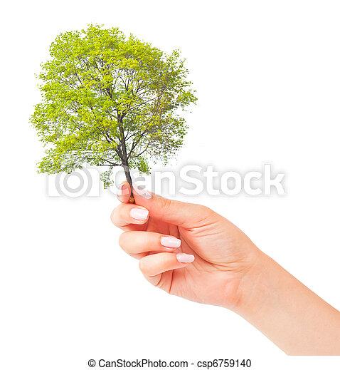 pequeno, árvore, mão - csp6759140