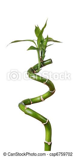 Stem of lucky bamboo - csp6759702