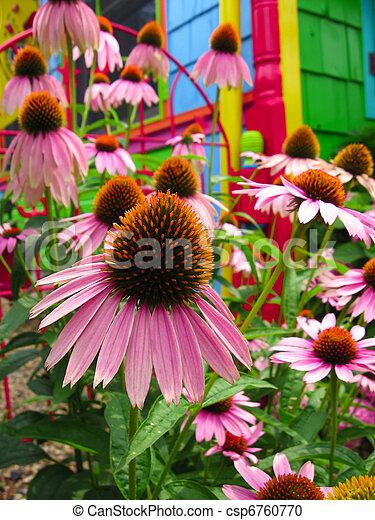 Flowers - Magic Fantasy Rainbow Coneflower Garden - csp6760770