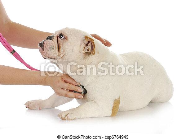 animal health - csp6764943