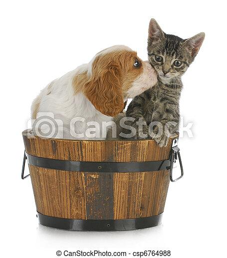 puppy and kitten - csp6764988