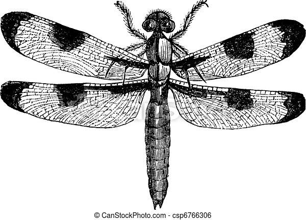 Dragonfly three spots (libellula trimaculata), vintage engraved illustration. Trousset encyclopedia (1886 - 1891). - csp6766306