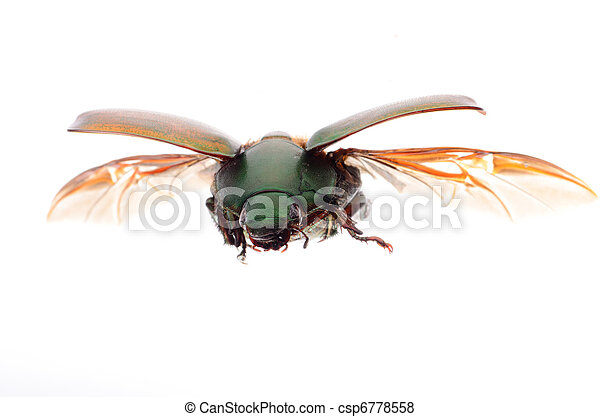 flying insect scarab beetle - csp6778558