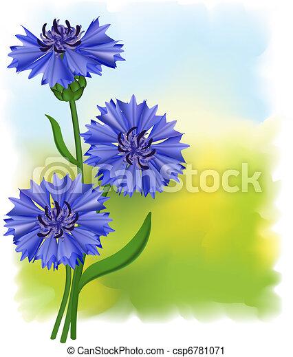 Flowers blue cornflower (Centaurea cyanus). Vector illustration. - csp6781071