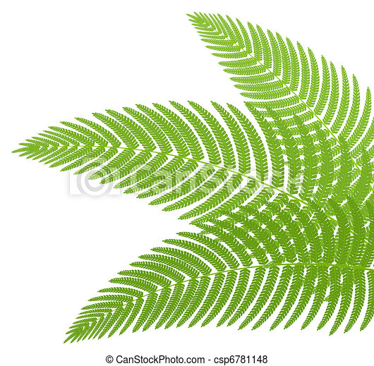 The green leaves of a fern. Vector illustration. - csp6781148