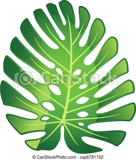 Leaf tropical plant - Monstera. - csp6781152