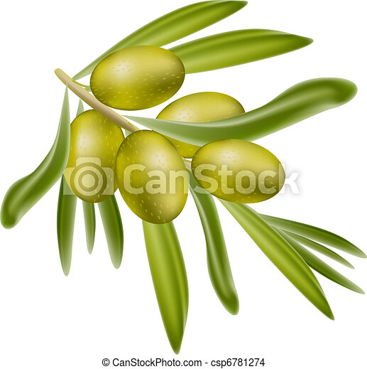 A branch of green olives. - csp6781274
