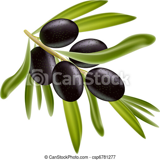 A branch of black olives. - csp6781277