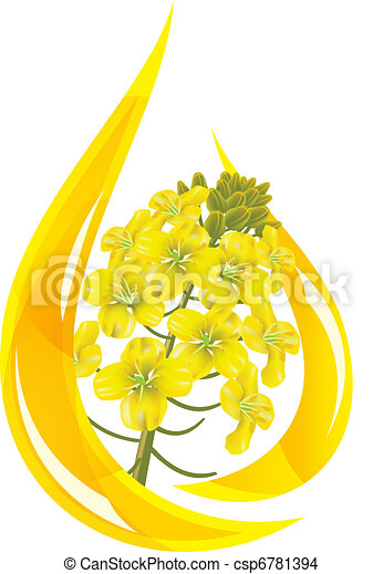 Canola oil. Stylized drop of oil and rapeseed flower. - csp6781394