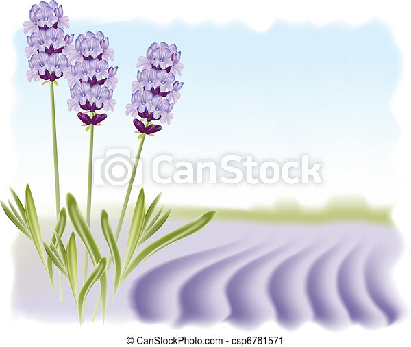 lavender illustrations and stock art. , lavender illustration, Beautiful flower