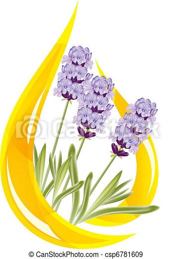 A drop of lavender essential oil. Vector illustration. - csp6781609