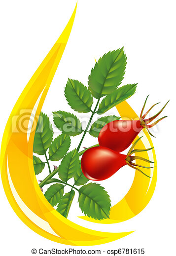 Oil rose hips. Stylized drop and twig with fruits. - csp6781615