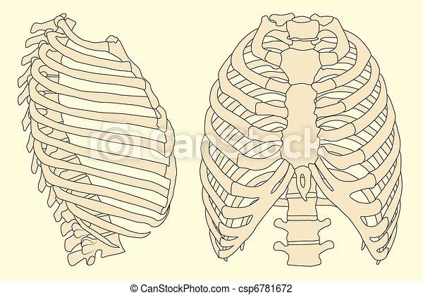 human rib cage - csp6781672
