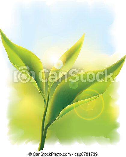 Fresh green tea leaves in the rays of sun. Vector illustration.  - csp6781739