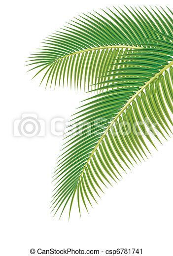 Leaves of palm tree on white background. Vector illustration. - csp6781741