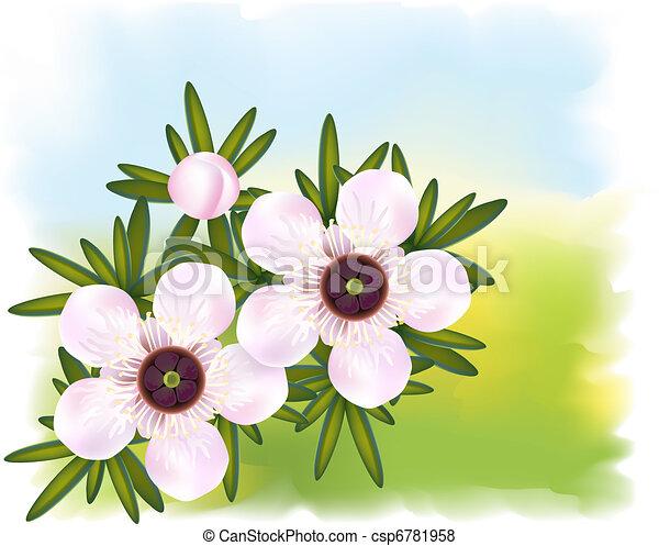 Manuka or Tea tree or just Leptospermum. Flowers and leaf. - csp6781958