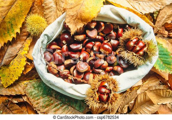 Stock de fotos bolsa delicioso casta as hojas c scaras for Recogido castana