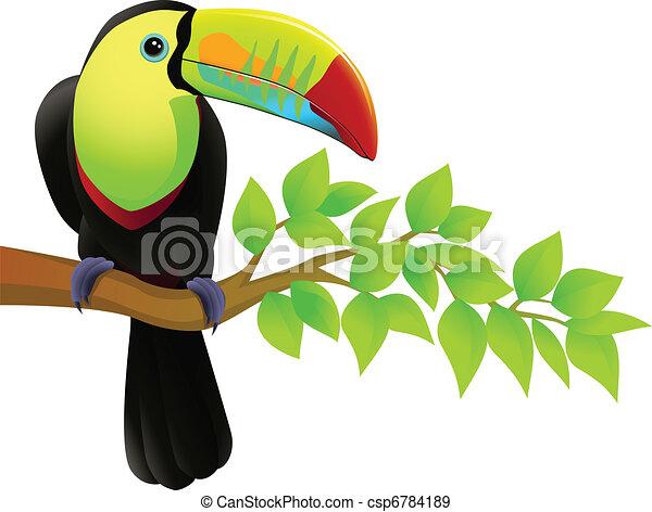 Toucan bird - csp6784189