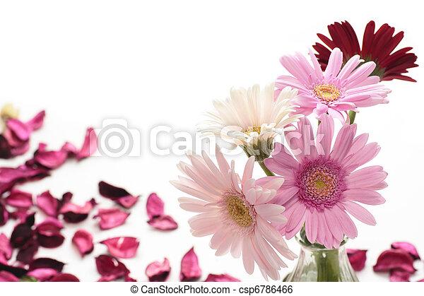 Pink Gerbera - csp6786466