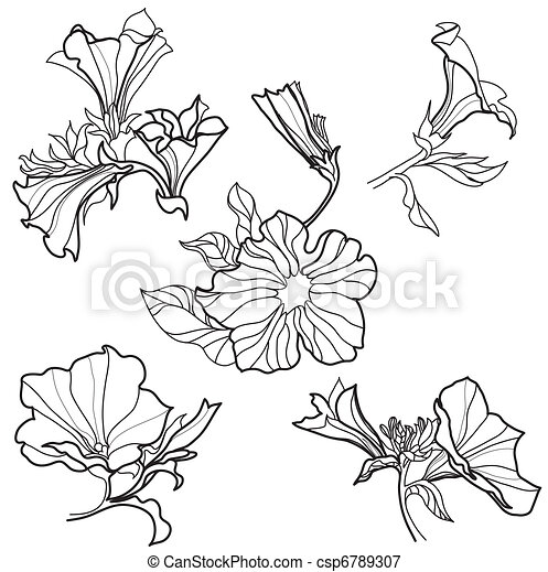 Bell Flowers Drawing Vector Set of Bell-flowers