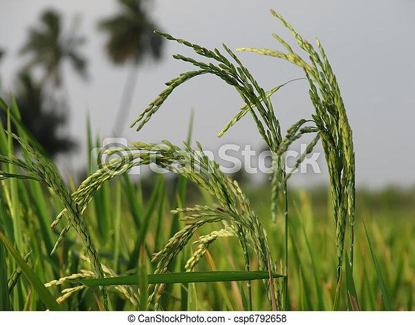農業 - csp6792658