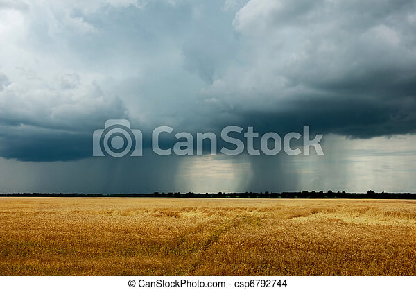 Landscape - a thunderstorm in a wheat field