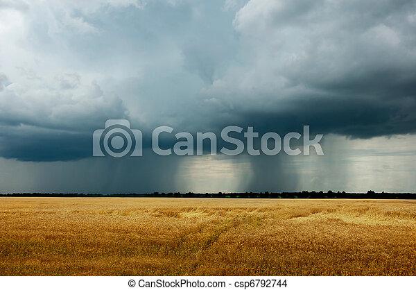Landscape - a thunderstorm in a wheat field
