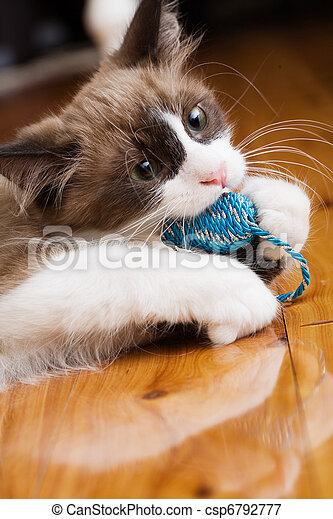 Kitten playing with chew toy - csp6792777