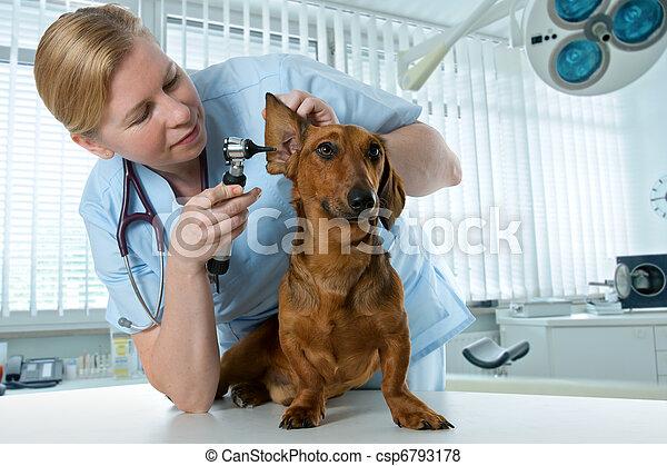 vet examining sick dog - csp6793178