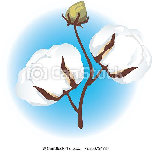 Cotton branch - csp6794727