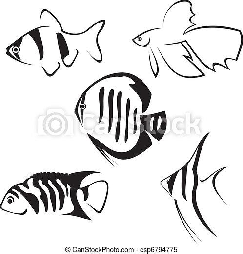 Aquarium fish. Line drawing. - csp6794775