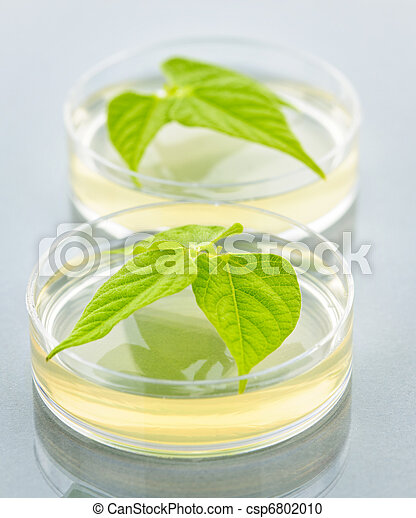 GM plants in petri dishes - csp6802010