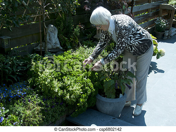 grandma working in the garden - csp6802142