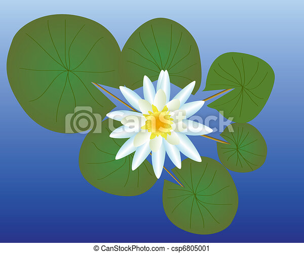 Lily Leaves Drawing Water Lily With Green Leaves