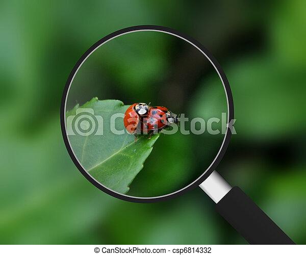 Magnifying Glass - Ladybugs - csp6814332