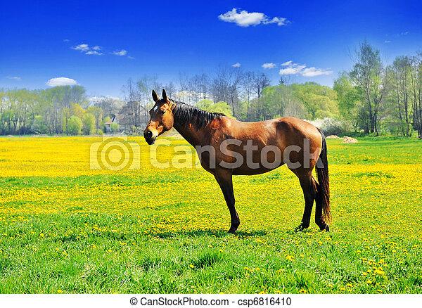 photographies de cheval pissenlits beautiful cheval. Black Bedroom Furniture Sets. Home Design Ideas